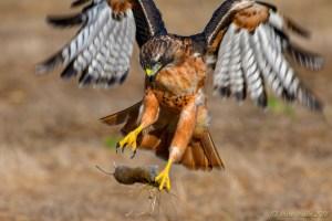 birds - 850_2602.jpg