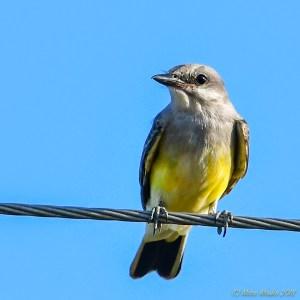birds - 850_3076.jpg
