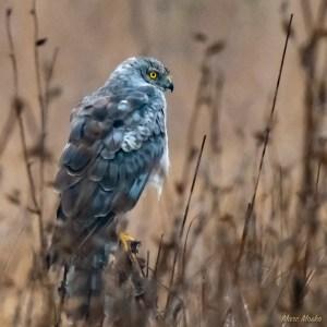 birds - 850_3756.jpg