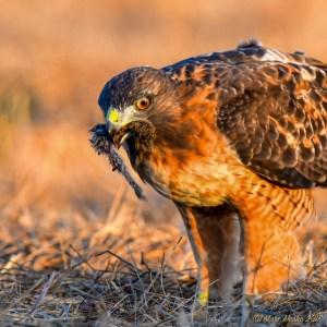 birds - 850_4080.jpg