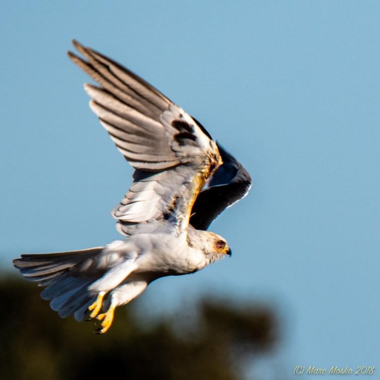 birds - 850_4658.jpg