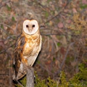 birds - 850_6516.jpg