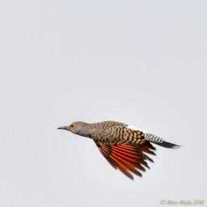 birds - 850_6729.jpg