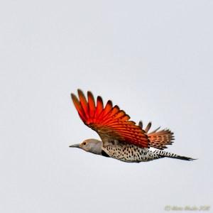birds - 850_6730.jpg