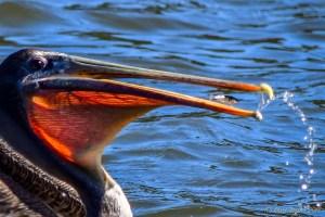 birds - 850_7188.jpg