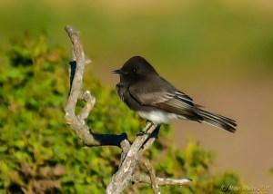 birds - 850_7994.jpg