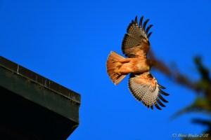 birds - 850_8083.jpg