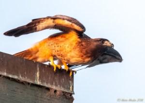 birds - 850_8723.jpg