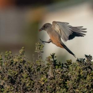 birds - 850_8855.jpg