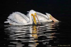 birds - 8Z0A4018.jpg
