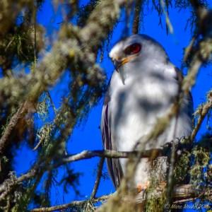birds - MEM_3934.jpg