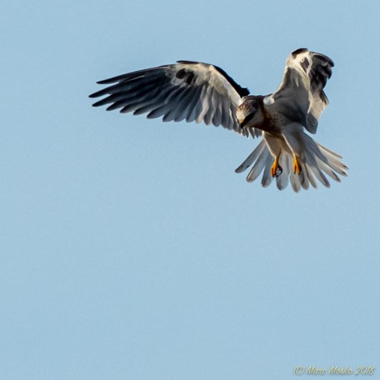 birds - MEM_5265.jpg