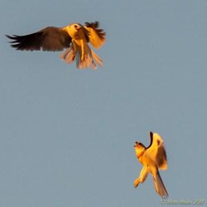 birds - PA050281.jpg