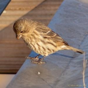 birds - PA280496.jpg