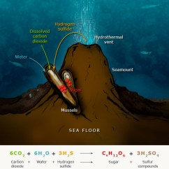 Diagram With Inputs And Outputs Of Photosynthesis Process Comcast Cable Tv Hookup Chemosynthesis Sea Floor Te Ara Encyclopedia