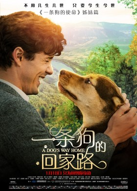 A Dog's Way Home Chinese Poster