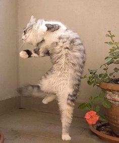 ロマンシングサガの猫