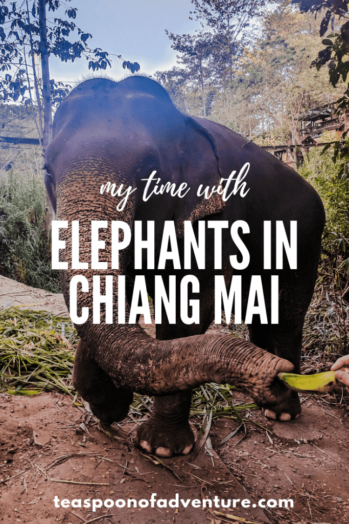 Hanging out with elephants in Chiang Mai is a Thailand bucket list item. But what is the experience really like? #travel #thailand