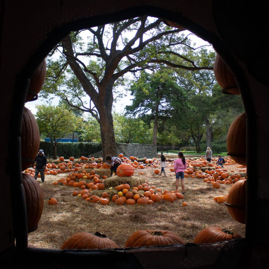 Dallas Arboretum is really beautiful year round, but it's fall exhibit is it's best!