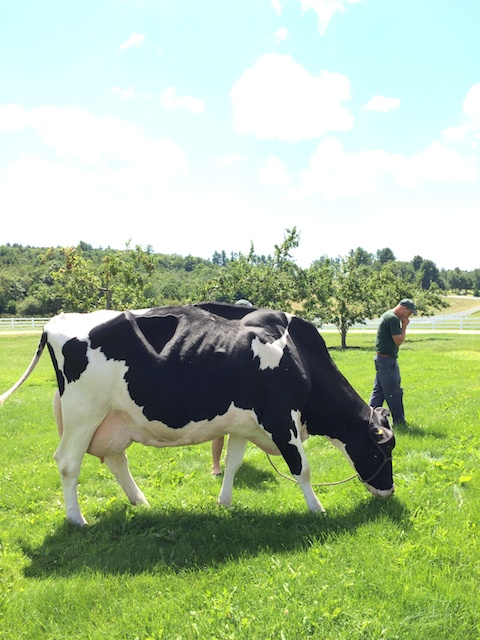 2015 Cabot Fit Team meets Hemi, 95-point World Certified Holstein