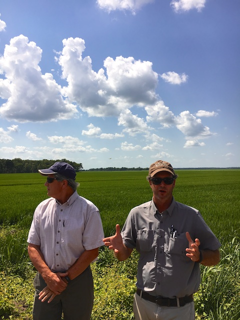 Delta Seed 3rd generation rice farmers in Greenville, MS (courtesy of #sponsored Uncle Ben's Rice Tour)