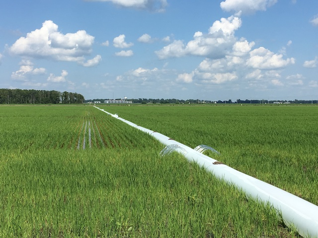 Rice fields being irrigated in Greenville, MS (couresty of #sponsored Uncle Ben's Rice Tour)