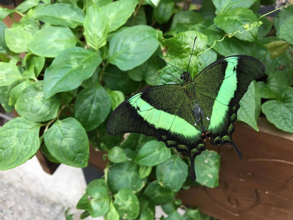 konya sommerfugle park, sommerfugle park konya, sommerfugle park tyrkiet, opelvelser i Tyrkiet