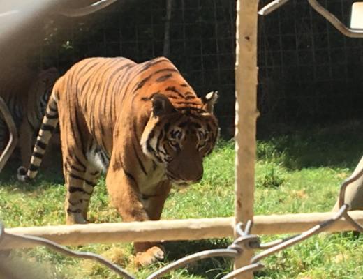 Antalya zoo, Antalya zoologisk have, seværdigheder til Antalya, Antalya oplevelser, tyrkisk zoologisk have,