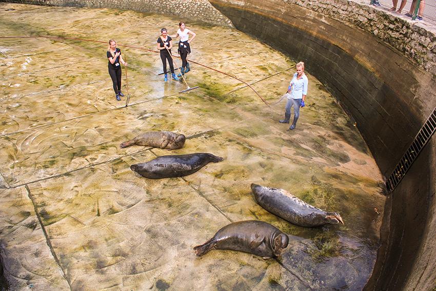 gdansk zoo, zooligsk have i Gdans, polen zoologisk have, seværdighederi Gdansk, gdansk seværdigheder, Gdansk guide, guide til Gdansk, søløver, rengøring af søløve bur,