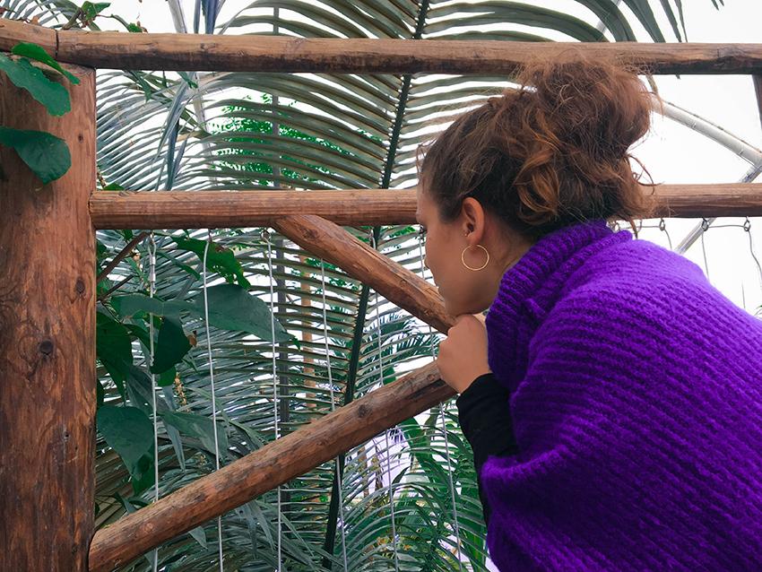 Botanisk have, aarhus botanisk have, gratis seværdigheder i århus, gratis oplevelser i århus, gratis aarhus oplevelser, gratis aarhus seværdigheder, indendørs have, århus guide, guide til århus, oplevelser i århus, rejseblog århus, rejseblog aarhus