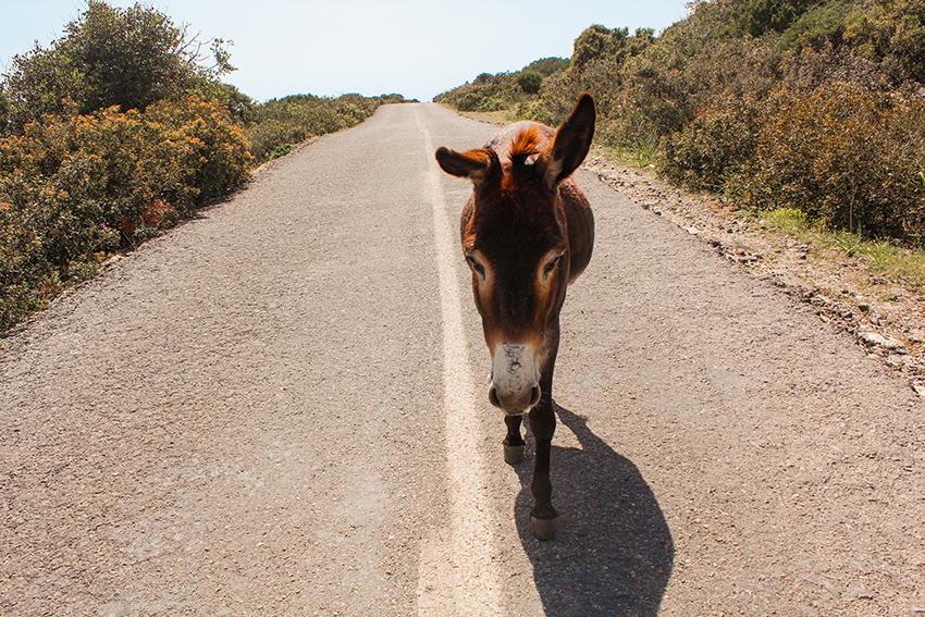 Nordcypern-vilde-æsler-rejseblog