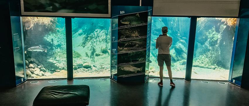 Aqua akvarium, Silkeborg akvarium, akvarium i Silkeborg, akvarium i midtjylland, børnevenlige seværdigheder i Silkeborg,