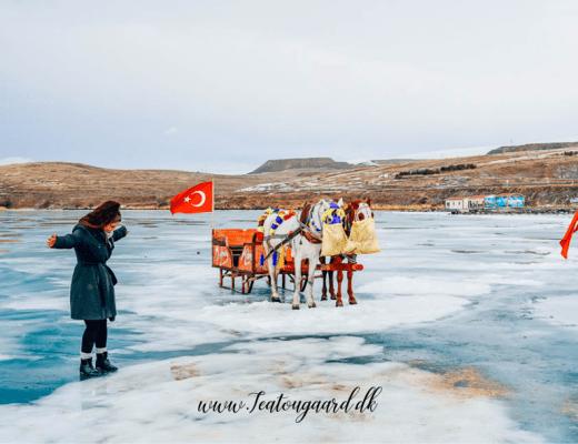 Cildir lake, Cildir søen, frossen sø i Tyrkiet, oplevelser i Tyrkiet, tyrkiske oplevelser, seværdigheder i Tyrkiet, hestevogn på sø, Kars, østtyrkiet, østlige Tyrkiet