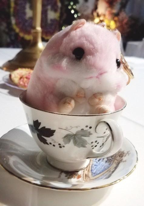 Basil the hamster