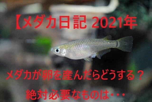 メダカ日記2021