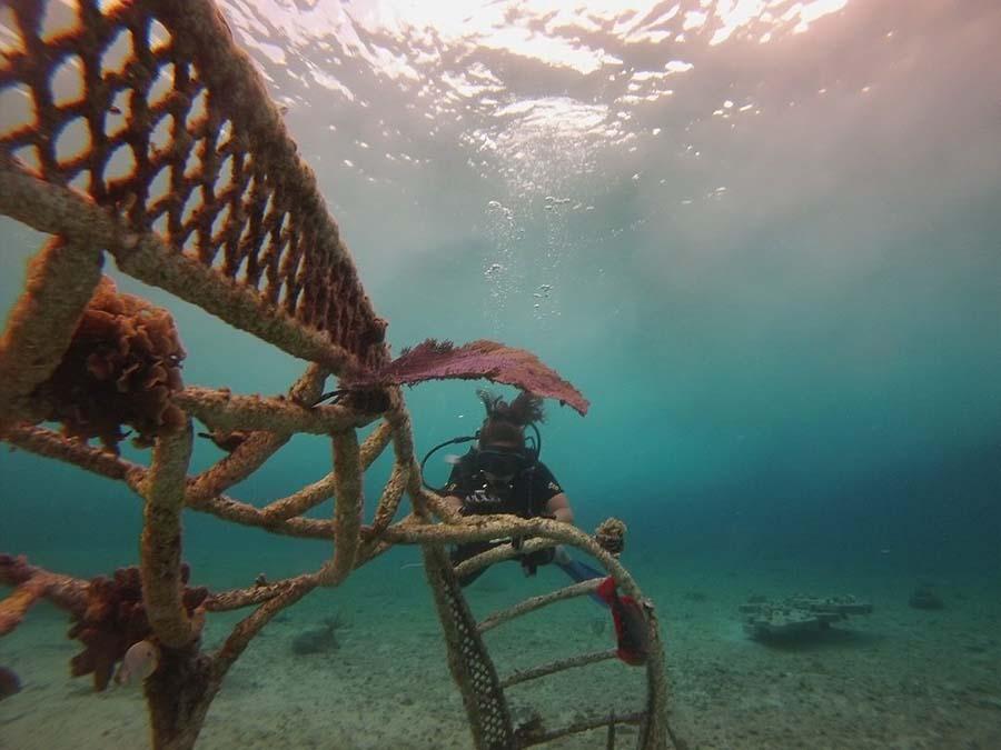 Los arrecifes de coral protegen las costas de fenómenos meteorológicos
