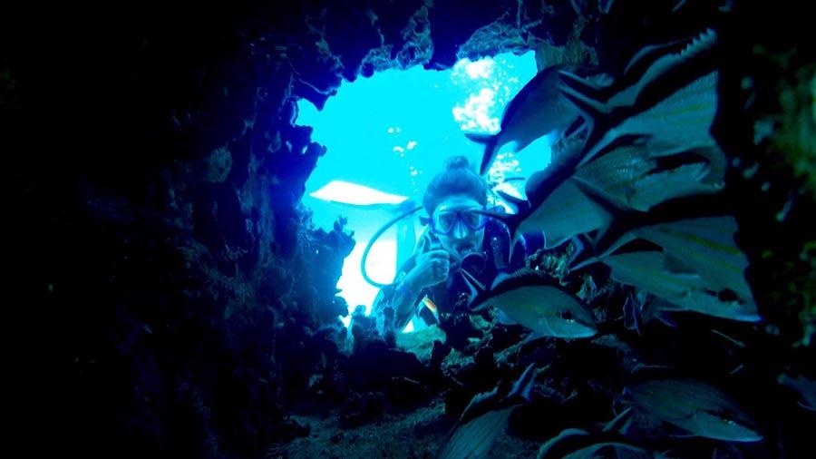 Son cientos de especies las que dependen de los arrecifes de coral