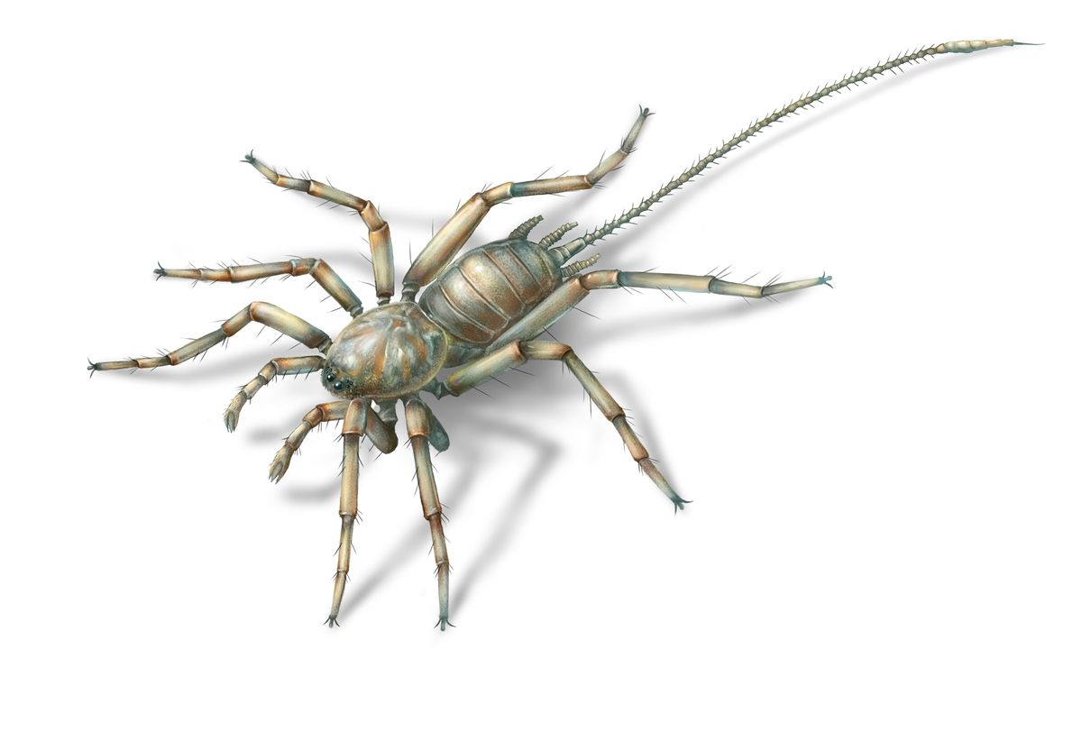 Fossilised spiders with 'tails' present in Myanmar