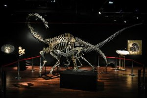 Two dinosaurs skeletons are up for sale at 650,000£ and 500,000£ each