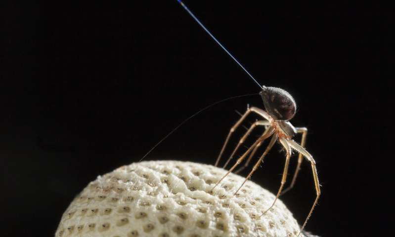 Researchers solve mystery of Charles Darwin's flying spiders