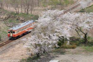 キハ52と桜