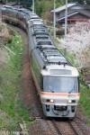 鉄道写真 桜満開 春の高山本線
