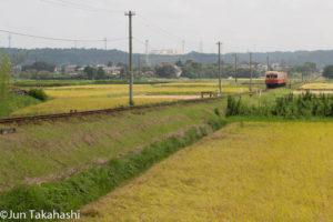 実りの秋をゆく小湊鐵道