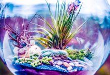 How to Build Your Own Eternal Terrarium Tutorial Video Micro Ecosystem DiY