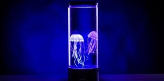 Jellyfish Decoration Gadget LED Light Desk ThinkGeek Aquarium