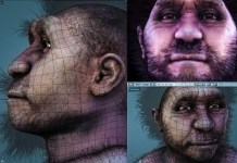 Homo_erectus_pekinensis_-_wireframe Video Game Dev 3D Polygons History Video Explainer Color
