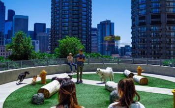 Dog Park Amazon Fetch Sidewalk Wireless Protocol Alexa News Launch Event Crop
