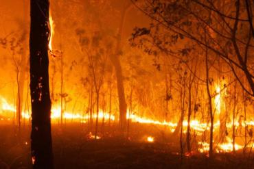bushfires-2020-1024x341.jpg