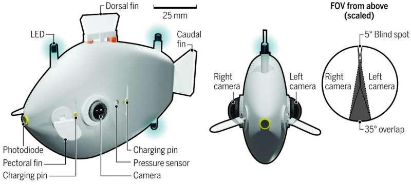 Robotic swarm swims like a school of fish