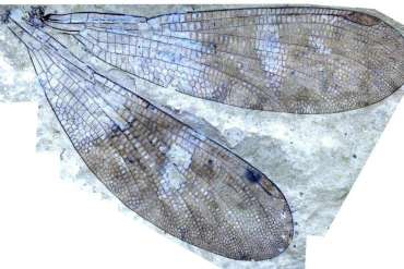 Paleontologists discover new insect group after solving 150-year-old mystery